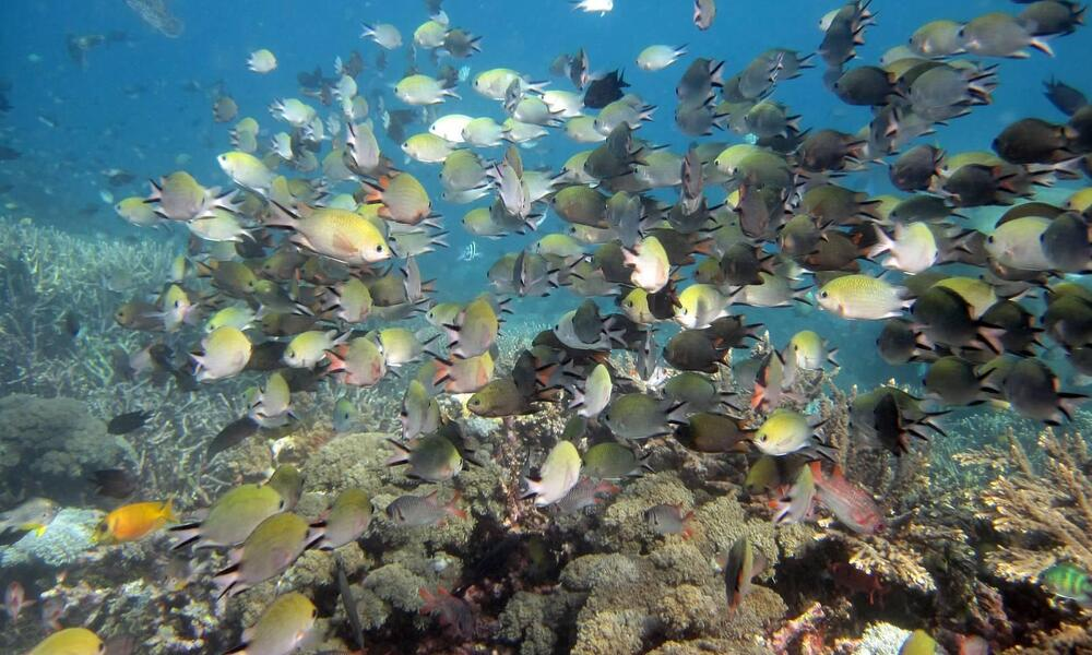 Fish and Coral Species