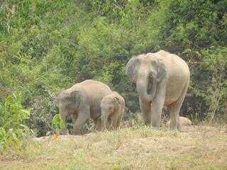 KuriBuri elephants