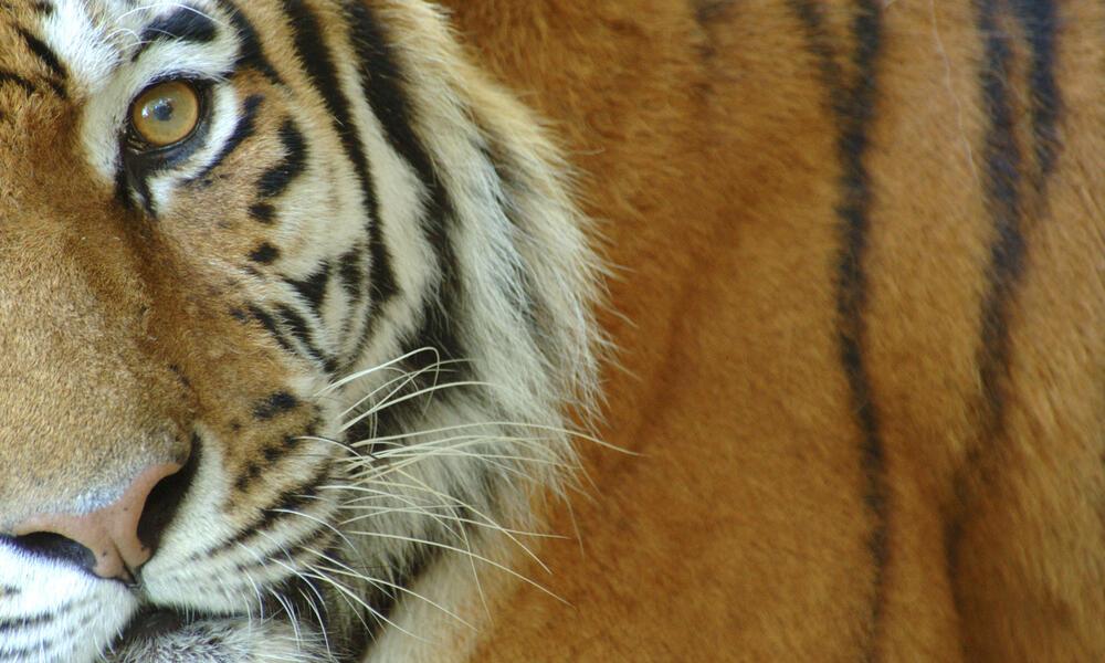 Illeagal Wildlife Trade