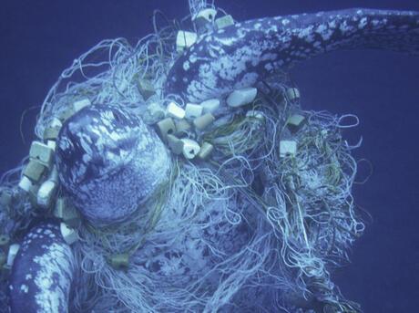 Marine Turtles Bycatch