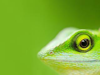 A close up of a lizard's face.