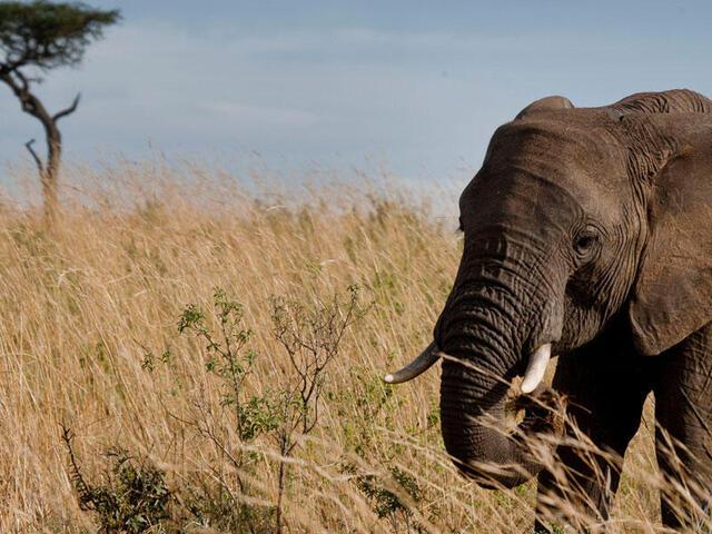 Lone Elephant Leadership Hero