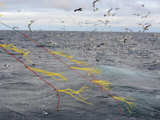 longline fishing