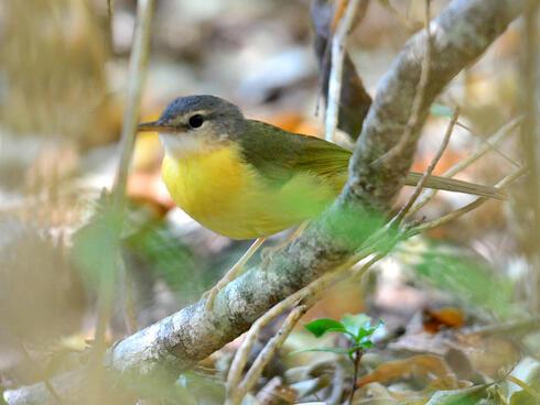 Bird in Madagascar