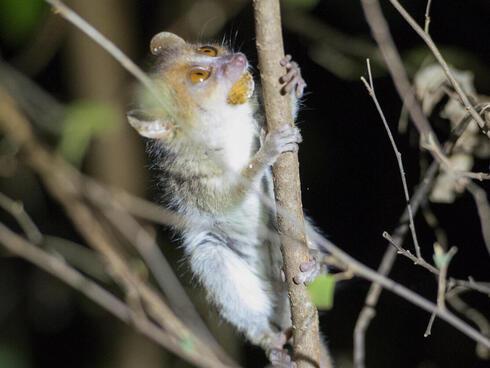 Wildlife in Madagascar