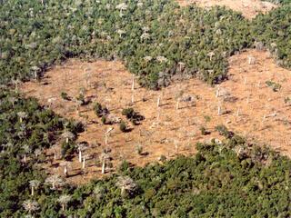 Deforestation in Kirindi forests, Madagascar