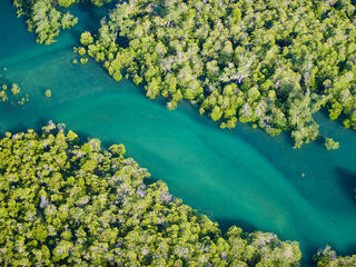 An aerial view of bright green mangroves bordering a winding blue river