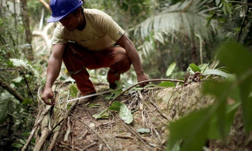 Man evaluating conservation impacts of FSC certification
