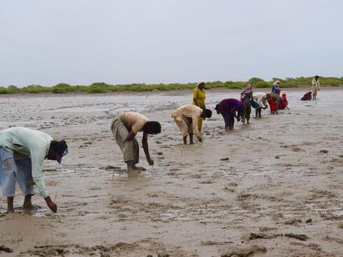 People tend to mangroves