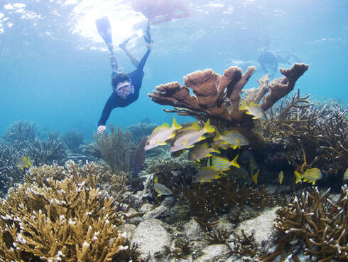 Mariko Wallen snorkeling to evaluate staghorn and elkhorn corals at Laughing Bird Caye National Park