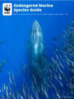 Endangered Marine Species Guide Brochure