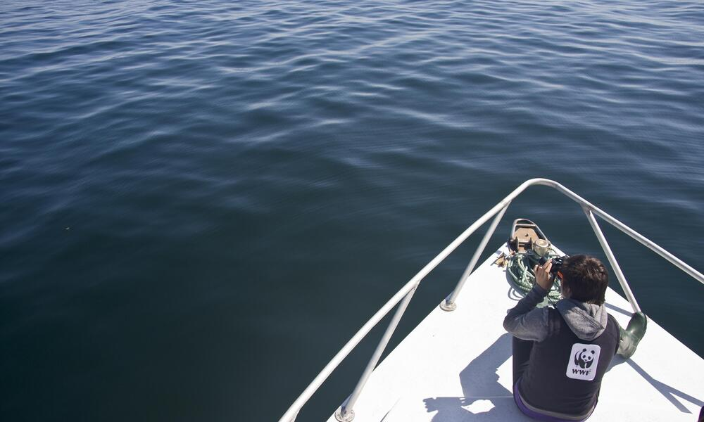 Marine student whale watching on Canada's Bay of Fundy