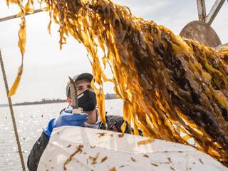 Matt Moretti on board ship harvests kelp off coast of Maine