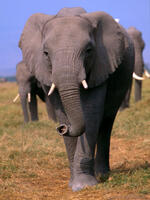 Reducing Desire for Elephant Ivory: A Psychosocial Guide to Address Ivory Consumption Brochure