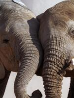 Factsheet: Demand under the Ban – China Ivory Consumption Research  Brochure