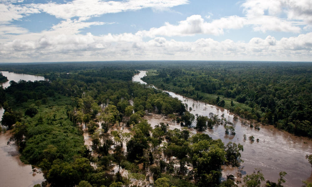 An aerial view of the last remaining flooded forests in the Lower Mekong River. These forests are a diverse, wetland mosaic, home to a large number of threatened species including the lesser adjutant stork and the grey-headed fish eagle.