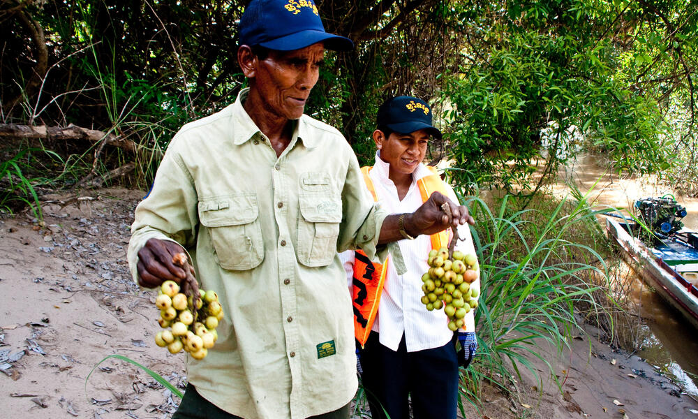 Local community member along the Mekong River selling fresh figs to boaters who pass by. Non-Timber Forest Products such as figs play an important role in rural livelihoods across the Mekong Region.