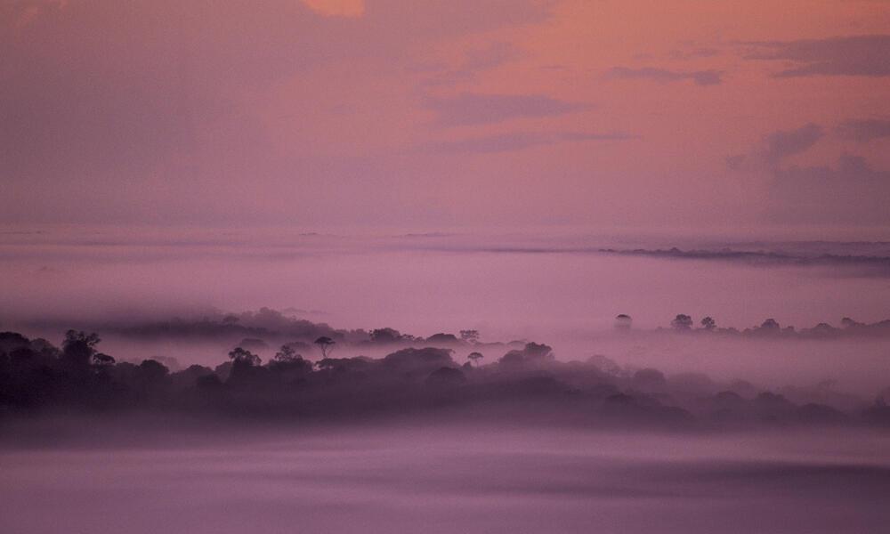 Misty Amazonian tropical rainforest