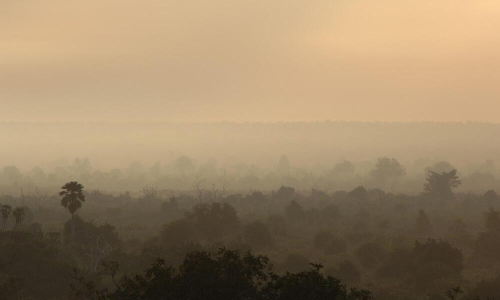 Misty forest in Selous