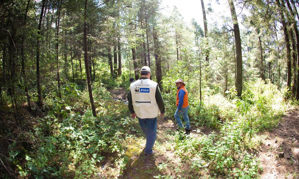 WWF staff walk through monarch overwinter forest