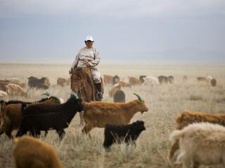 A man on horseback herding goats on a dry grassy landscape