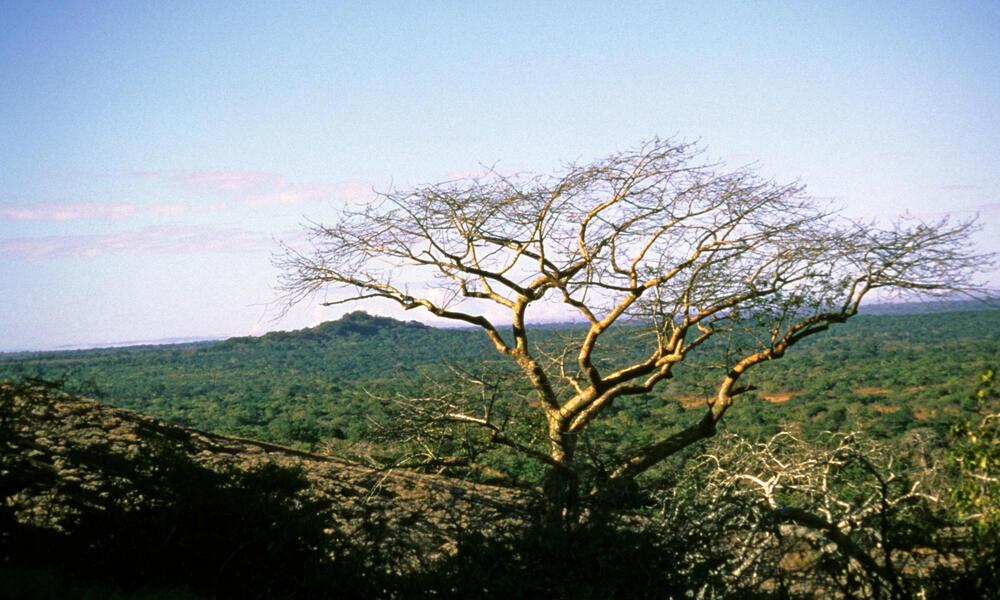 Mozambiquec