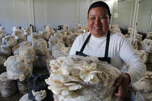Mushroom production in Mexico