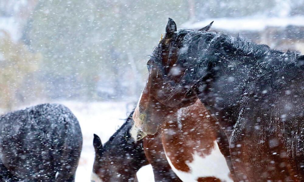 Horses in winter weather