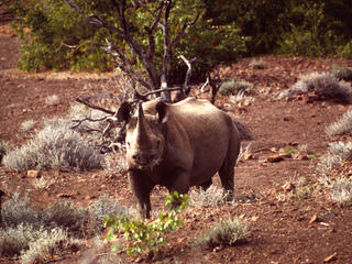 Namibia Protecting Species