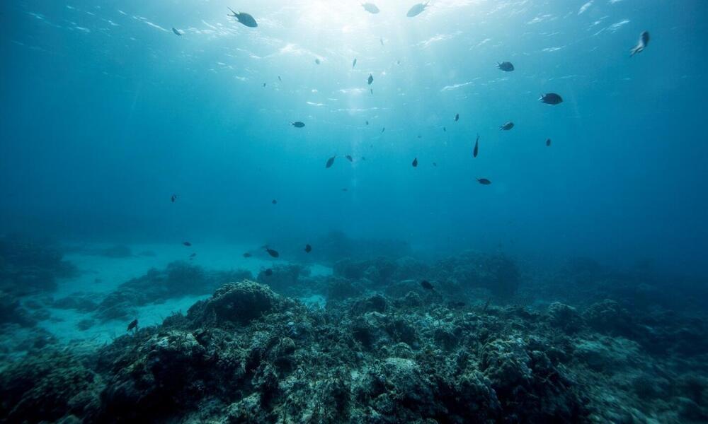 Underwater off the coast of Nuarro, Mozambique