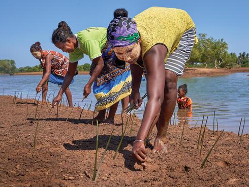 Women planting mangroves on shore