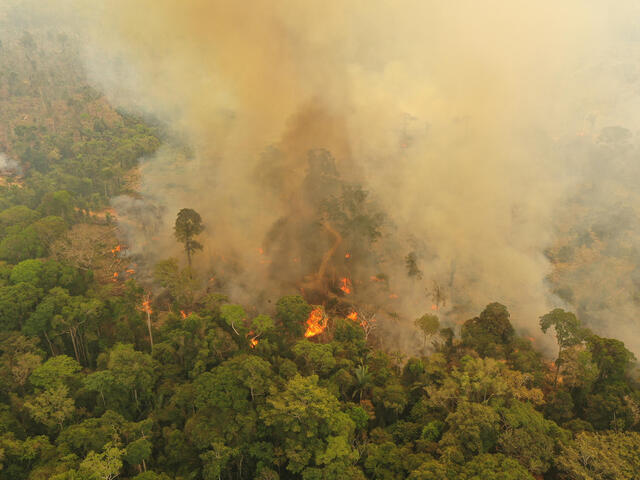 Overhead image from the fires in the Brazilian Amazon, 2019.