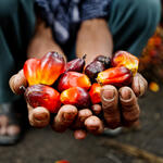 palm oil close up