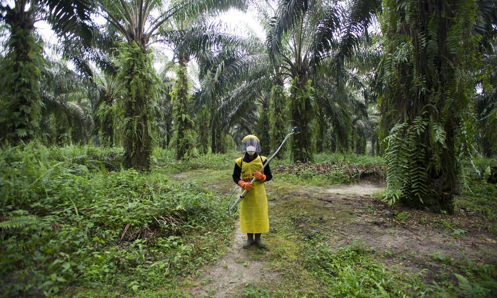 palm oil worker