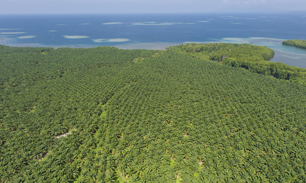 Sustainable palm oil plant
