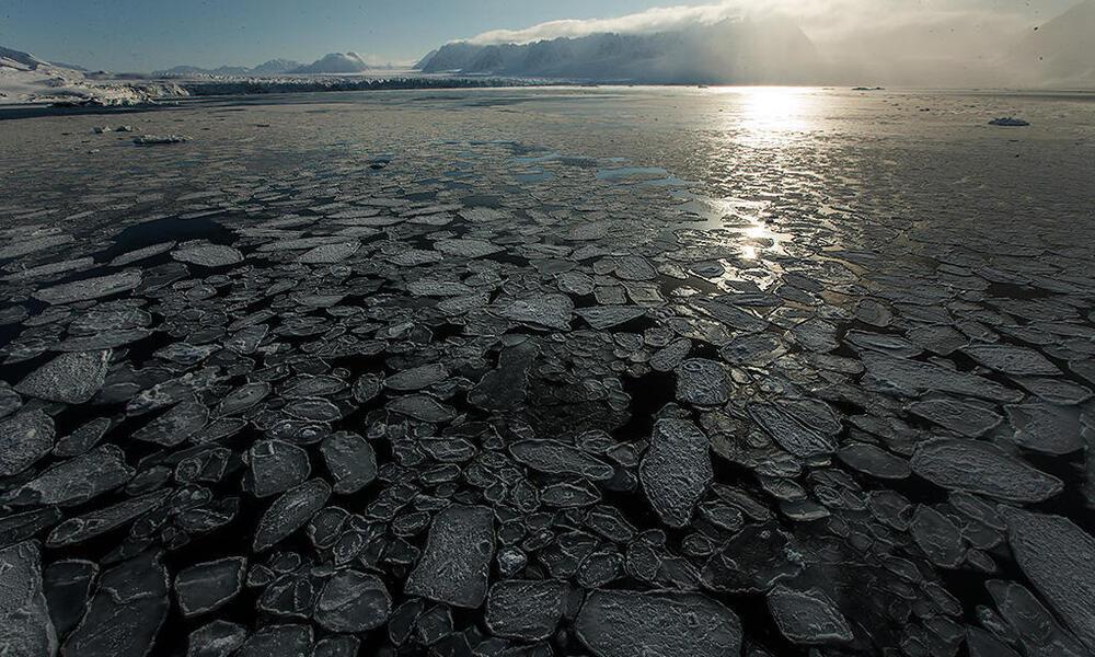 pancake ice Monaco glacier