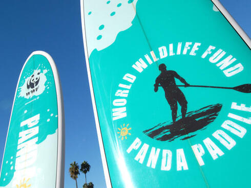 Panda Paddle surfboards