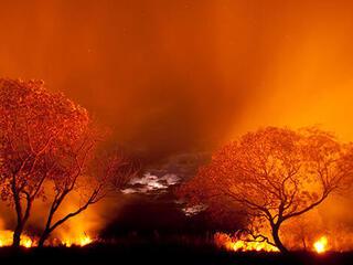 Fire burning in Pantanal