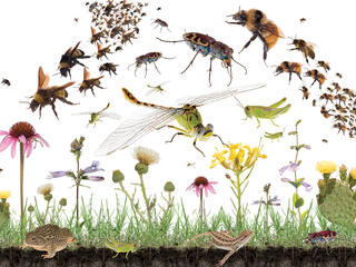 Prairie plants and insects