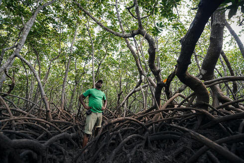 Patroling a mangrove forest for poachers