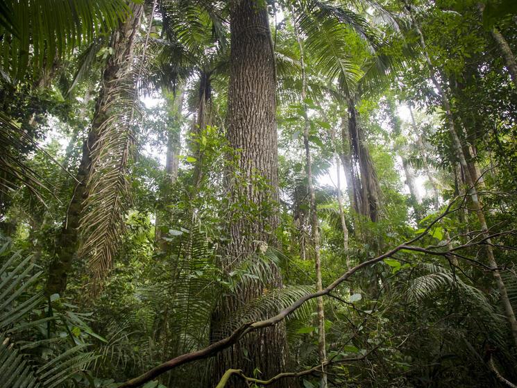 forest in peru