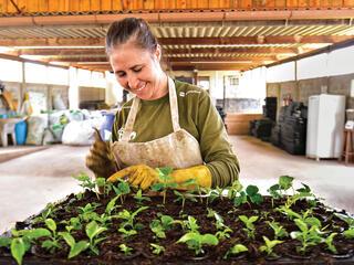 Santos planting seedlings