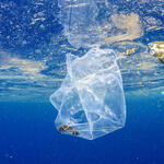 A plastic bag underwater