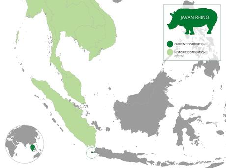Population distribution of the Javan Rhino