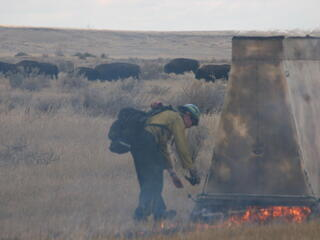 Prescribed burn on Northern Great Plains with bison