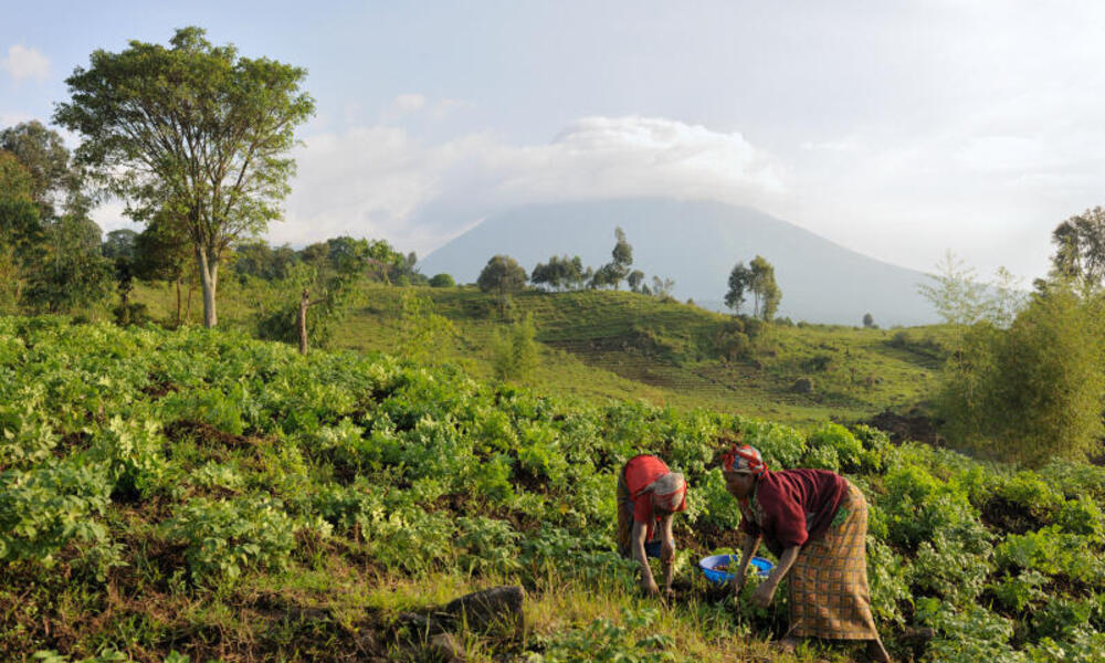 women on hillside