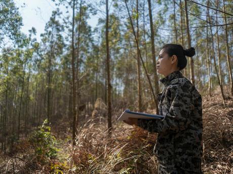 Employee from Qinlian Forestry in the forest