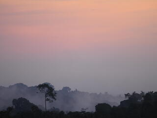 WWF is working in the Mai Ndombe region of the Democratic Republic of Congo to build community engagement in reducing emissions from deforestation and forest degradation, also known as REDD+. Our aim, in collaboration with communities and governments, is
