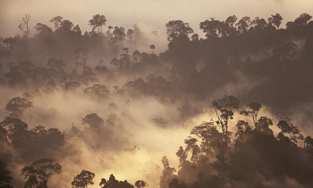 Sunrise Over Rainforest, Borneo