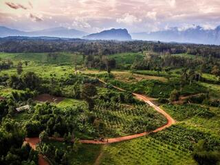 Aerial view of Rattan plantations